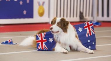 Dog Lovers Show - Brisbane